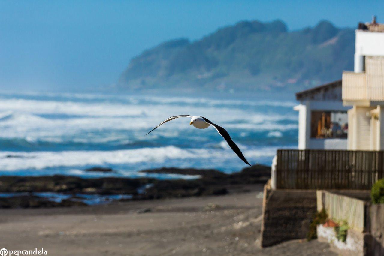 Playa de Iloca, Licantén