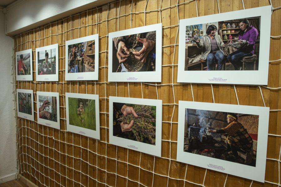 Inauguración exposición_Casa de la Cultura de Ancud-3