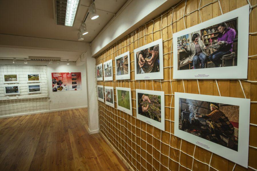 Inauguración exposición_Casa de la Cultura de Ancud-4